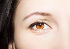 Beautiful insightful look brown woman`s eyes.  Stock Photography