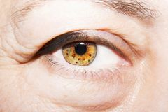 Beautiful insightful look brown woman`s eyes. N Stock Images