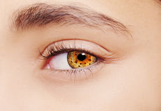 A beautiful insightful look eye. Close up shot Stock Images