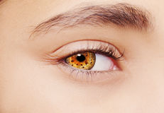 A beautiful insightful look eye. Close up shot Royalty Free Stock Images