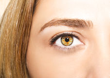 Beautiful insightful look women`s eyes.  Stock Photography