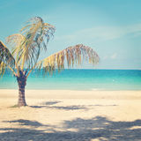 Beautiful instagram of lone palm tree on a tropical beach. With ocean Royalty Free Stock Photography