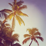 Beautiful instagram of palm trees with sun setting behind them Royalty Free Stock Photos