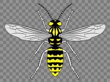 Beautiful Intricate Wasp Detail Illustration vector illustration