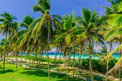 Amazing fabulous view of  tropical fluffy palm tree garden with turquoise tranquil ocean in background Stock Photos