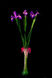 Beautiful Iris flowers in vase Royalty Free Stock Images