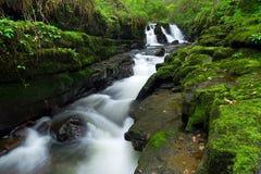 Beautiful irish waterfall. Beautiful waterfall of Clare Glens, Ireland Stock Images