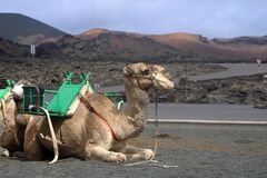 Lanzarote on the Canaries. Beautiful Island Lanzarote on the Canaries royalty free stock photography
