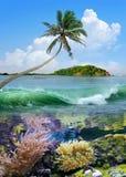 Beautiful island with palm trees Stock Image