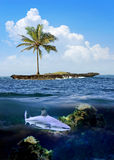 Beautiful island with palm trees and blue sky. Shark underwater Royalty Free Stock Photography