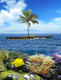 Beautiful island with palm trees and blue sky. Yellow fish under Stock Photography