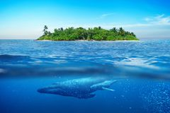Beautiful island with palm trees. Whale underwater. Island in the ocean with royalty free stock photos