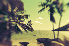 Beautiful Island Paradise with palms and sailboat Royalty Free Stock Image