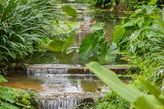 The beautiful island of Phuket Thailand. A gentle stream flows through the jungle Stock Image