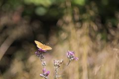 Butterfly leaning on flower. Beautiful isolated colored butterfly leaning on flower royalty free stock images