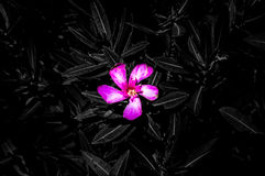 Beautiful Isolated pink flower in wild stock photo
