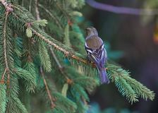 Isolated sparrow royalty free stock photos