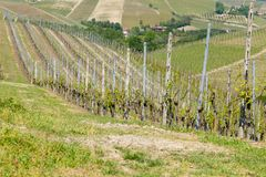 Landscape with vineyards from Langhe,Italian agriculture Royalty Free Stock Photo