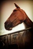 Italian mare Royalty Free Stock Image