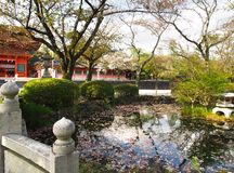 The beautiful japan garden in kyoto ,japan Royalty Free Stock Image