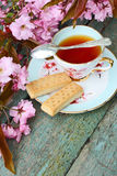 Beautiful japanese cherry tree and a cup of tea Royalty Free Stock Photo
