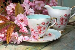 Beautiful japanese cherry tree and a cup of tea Royalty Free Stock Photography
