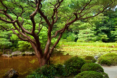 Beautiful Japanese garden Royalty Free Stock Photography