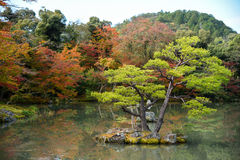 Beautiful Japanese garden in autumn of Japan Royalty Free Stock Image