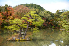 Beautiful Japanese garden in autumn of Japan Royalty Free Stock Photography