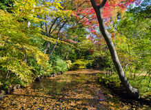 Beautiful japanese garden in autumn, Tokyo Stock Image