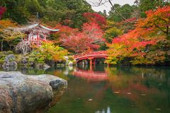 Beautiful japanese garden with colorful maple trees in autumn Royalty Free Stock Photos