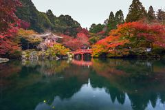 Beautiful japanese garden with colorful maple trees in autumn. Kyoto Stock Photos