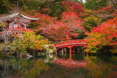 Beautiful japanese garden with colorful maple trees in autumn. Kyoto Royalty Free Stock Photography