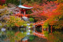 Beautiful japanese garden with colorful maple trees in autumn. Kyoto Stock Image