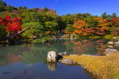 Beautiful japanese garden with colorful maple trees Stock Photo