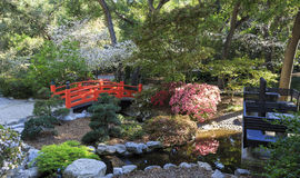 Beautiful Japanese garden at Descanso Garden Royalty Free Stock Photos