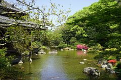 Japanese Garden with Green Trees and Historic Buildings Stock Images
