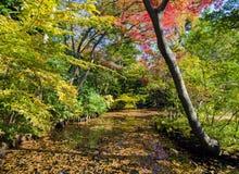 Beautiful Japanese Garden In Autumn, Tokyo Stock Image