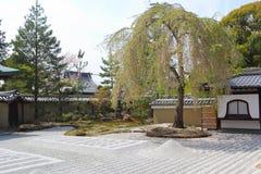 Beautiful japanese garden Royalty Free Stock Images