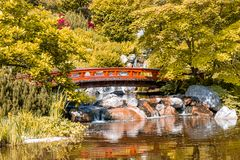 Japanese garden with wooden bridge and the waterfall stock images