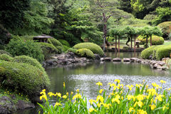 Beautiful japanese green park Royalty Free Stock Image