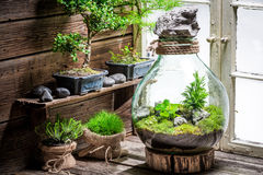 Beautiful jar with piece of forest, save the earth concept. On wooden table Stock Images
