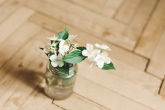 Beautiful jasmine flowers on branch in glass jar on rustic old wooden floor, copy space. Floral decor and arrangement. Gathering. Flowers. Rural still life stock image