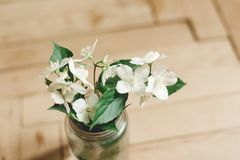 Beautiful jasmine flowers on branch in glass jar on rustic old wooden floor, copy space. Floral decor and arrangement. Gathering. Flowers. Rural still life stock images