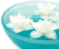Beautiful Jasmine Flowers on Water in Bowl. Beautiful jasmine flowers flowing on the water in a blue bowl stock photo