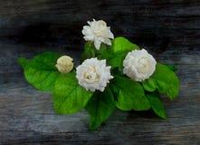 Beautiful jasmine white flower Stock Image