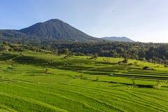 Beautiful Jatiluwih Rice Terraces in Bali Stock Image