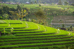 Beautiful Jatiluwih Rice Terraces in Bali, Indonesia Stock Photos