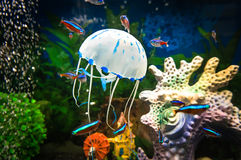 Beautiful jellyfish, medusa in the neon light with the fishes. Royalty Free Stock Image
