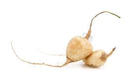 Beautiful Jicama fruit isolated on white background. Jicama isolated on white background Stock Photography